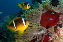 Under the sea / Life beneath the ocean waves