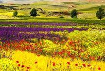 Farben der Welt / Die Welt ist ein bunter Ort.