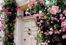 English Rose Gardens / A stroll through some English rose gardens.