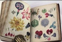 i l l u s t r a t i o n / Any kind of illustration. Beautiful sketchbooks.