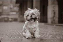 Noticiasdeperros.com / Tu revista canina en internet. Todo sobre razas, cuidados y enfermedades.