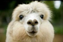 We ♡ alpaca