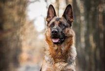 Fotografías de perros / Fotografias de perros