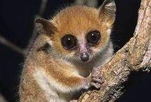 Espèces Endémique de Madagascar