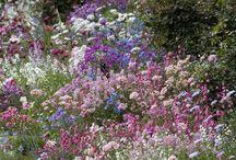 Tuinieren/Garden