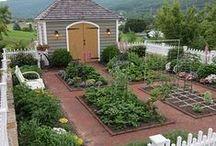 potager - užitek i krása / Kuchyňská zahrada společně s květinami