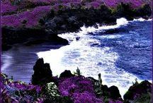Hawai'i Adventure