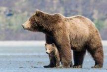 Bears / Bears <3 / by Dar Crutchfield