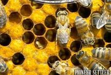 {Homesteading} Bees / Bees are becoming so popular on homesteads and I can see why! They're great for your homestead ecosystem and produce amazing honey that can help your family fight allergies!