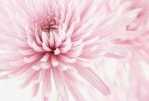 Beauty of Pastels
