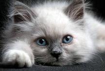 Cats & Kittens / by Jan