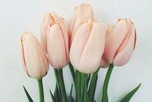 FLEURS * Flowers / Les fleurs dans toutes leurs splendeurs.  Flowers in all their magnificences