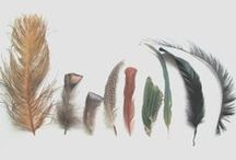 PLUMES * Feathers