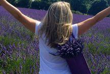 Lavender / Flower
