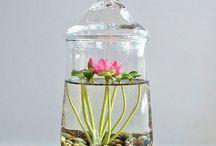 Plantas aquáticas e aéreas