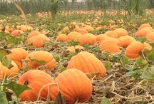 The Pumpkin Patch / The Bates Pumpkin Festival runs from the last weekend in September until Halloween Day.  The month is filled with events and activities to help your family create many lifetime memories.