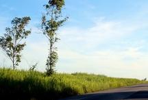 On the road / Fotografia Photography