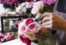 Floraria Lisega