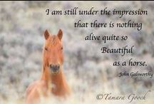 Favorite quotes / From cowboy quotes to Maya Angelou, sometimes the saying just fits.