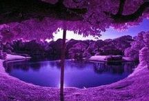 Dancing in Purple / Purple Dance Clothing, Purple Dancewear, Purple Inspired Pins
