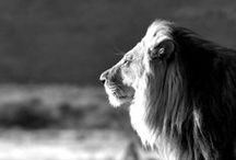 Animals / by Darlida C