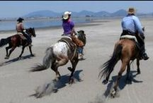 Horseback Riding Vacations | RanchoLasCascadas.com / Horses and Riding at the Rancho