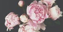 FLOWERS | PHOTOGRAPHY / FLORAL | COLOURS |FULL |CONTRAST |ARRANGEMENT |SHEETED |ADORNED |BOUQUET