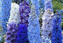 Siniset ja lilat kukat