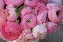 Pinkit kukat