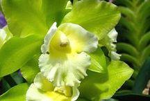 Vihreitä kukkia
