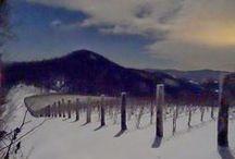In His Hands - the Vineyard