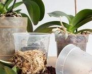 Orkideojen hoito
