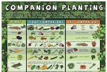 Food garden à la Permaculture / ideas for gardening