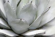 cactus heaven