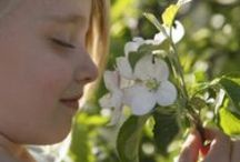 Frühling am Bauernhof in Südtirol / Wenn der Baumschnitt abgeschlossen ist, dauert es nicht mehr lange, bis die Apfelblüte beginnt. Dann bestimmen zwei Farben das Landschaftsbild: rot und weiß! Wer also Südtirols Frühling fernab ausgetretener Touristenpfade erleben will, liegt mit Bauernhofurlaub richtig – und voll im Trend.