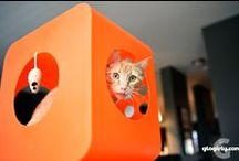 Cats Need Houses too! / Every cat deserves a home. Houses, hammocks, cribs, catios and homes for your favorite cats and kittens.