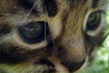 Piękno zwierząt
