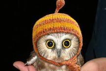 Owls / by Christina Onstott