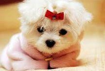 so cute / so cute