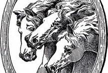 horses konie