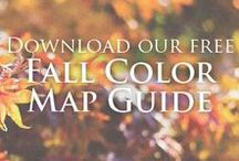 Fall Leaves Tour / Grand Rapids, MN is located within a million acres of hardwood forests. Fall is a short season, but beautiful fall colors amongst scenic byways, thousands of lakes and tamarack bogs.