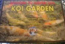 Koi Karper / GM
