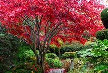 Garden / by Brent Lohmann