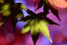 Autumn Pinspiration!