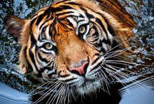 God's Amazing Creatures!