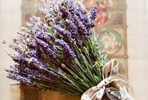 Flowers: Lavender