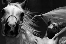 <3 Horse n Me / a mix of horslove