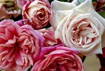 Another name for a rose / Our love for the rose