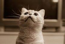 Наши котики / О котиках - наших, наших родственников и друзей. В основном здесь будут Чили, Фосс и Тихон