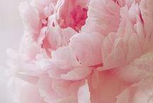 Pink Blush / Color -Pink